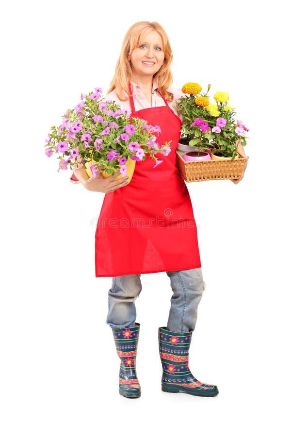 Полнометражный портрет середины постарел женский флорист держа flo стоковое фото