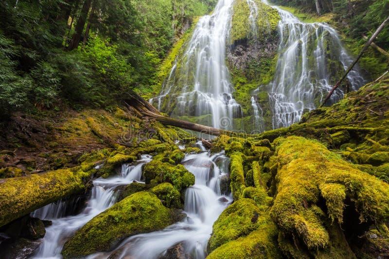 Полномочие понижается в лес Орегона стоковое изображение rf