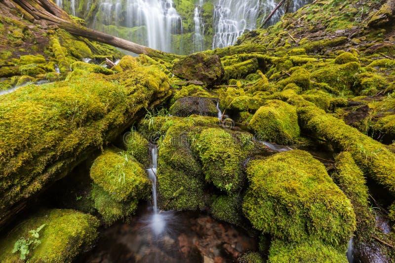 Полномочие понижается в дождевой лес Орегона стоковые изображения