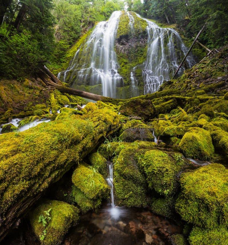 Полномочие понижается в дождевой лес Орегона стоковое изображение