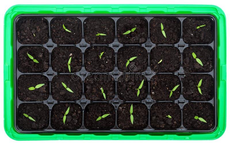 Download Поднос прорастания с малыми саженцами Стоковое Фото - изображение насчитывающей green, завод: 37931156