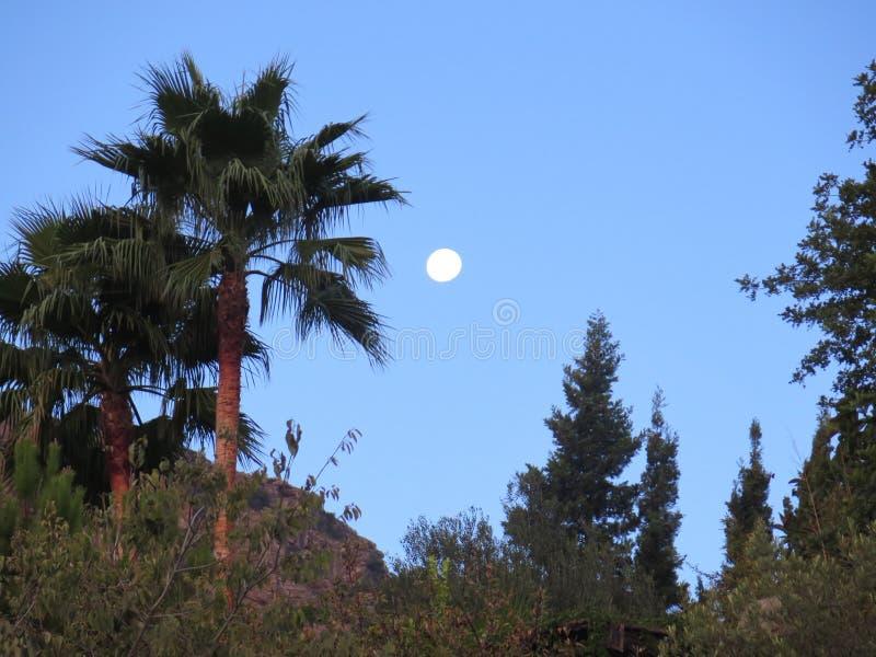 Download Полнолуние и пальма стоковое фото. изображение насчитывающей небесно - 81814668
