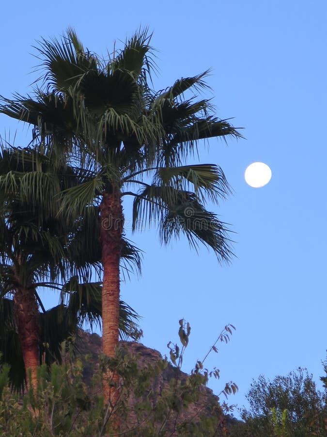 Download Полнолуние и пальма стоковое изображение. изображение насчитывающей кратер - 81814679