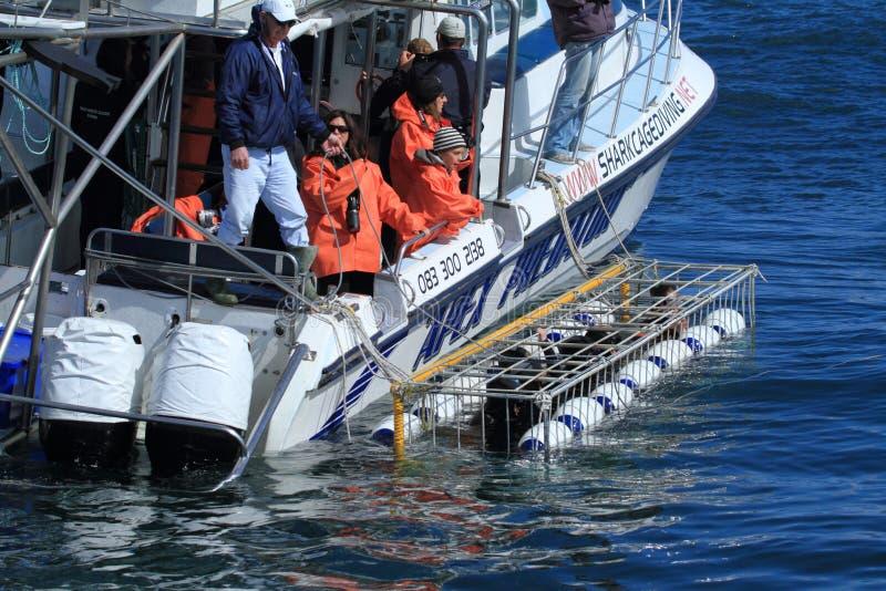 Подныривание акулы стоковое фото