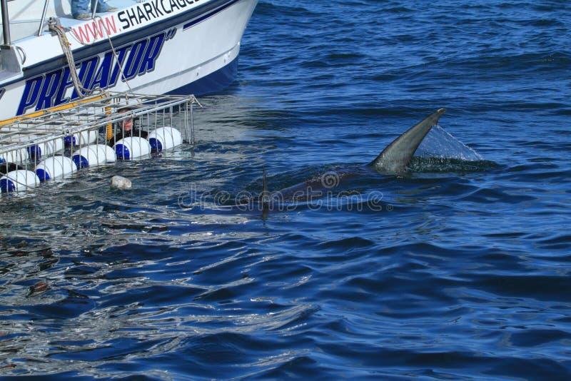 Подныривание акулы стоковые фото