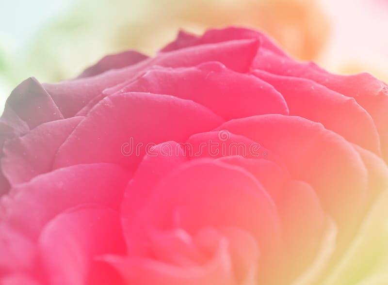 Подняла красная розовая валентинка влюбленности предпосылки цвета стоковые изображения