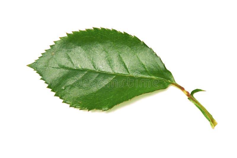 Подняли листья стоковое изображение