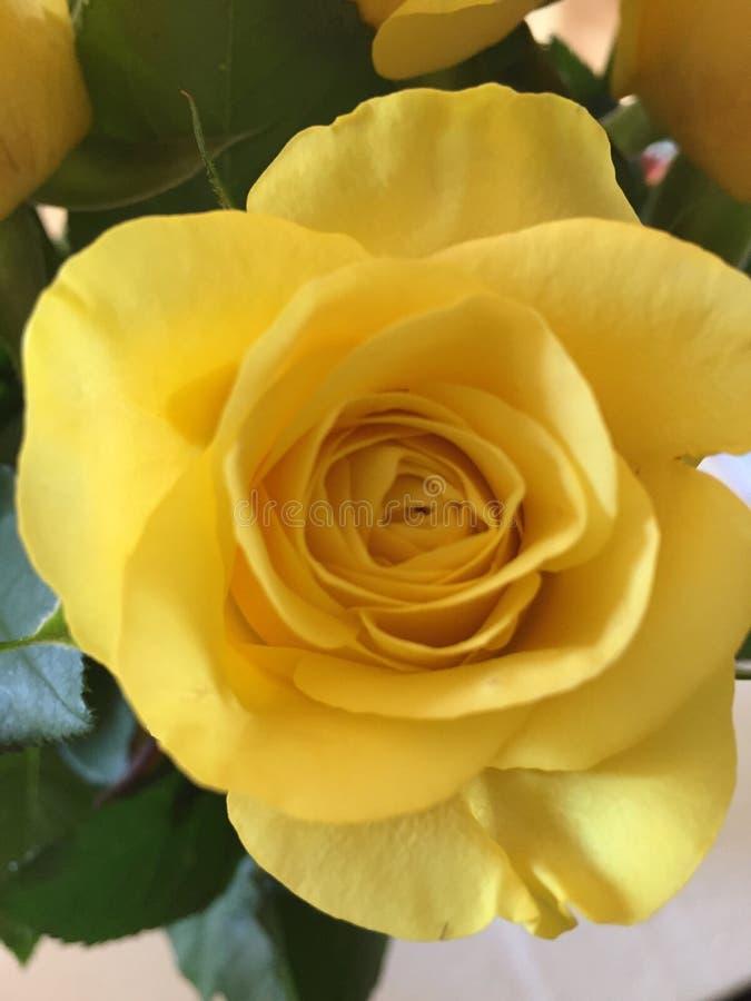 Подняло желтое романс штрафа влюбленности стоковое фото