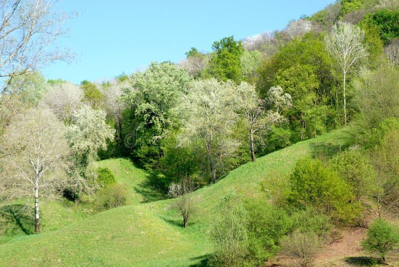 Пологий склон выровнянный с свежими зелеными fronds стоковое фото rf