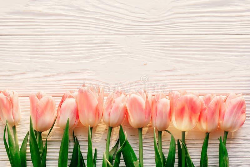 Положение квартиры весны розовые тюльпаны на белой деревенской деревянной предпосылке f стоковая фотография rf