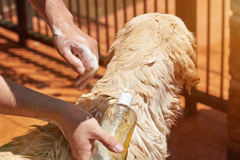 Положите шампунь на собаку стоковые изображения rf