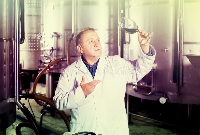 Положительный создатель вина контролирует качество вина стоковая фотография