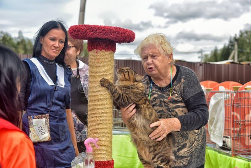 Под открытым небом международная выставка кота стоковые фото