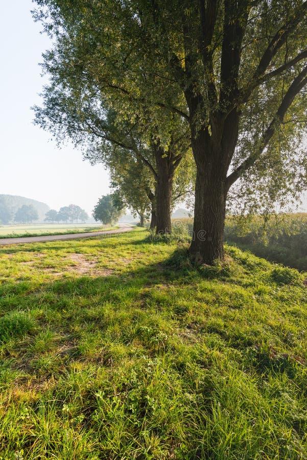 Подсвеченная съемка 3 деревьев в обочине стоковое изображение rf