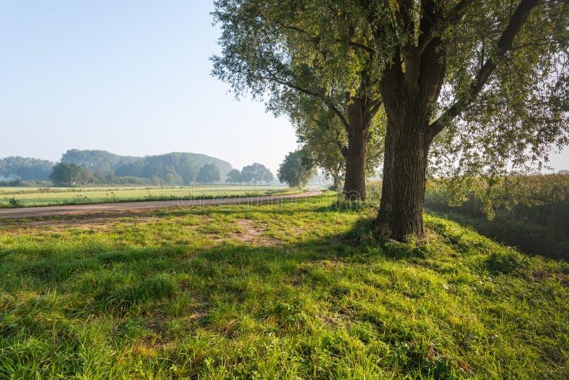Подсвеченная съемка 3 деревьев в обочине стоковое изображение
