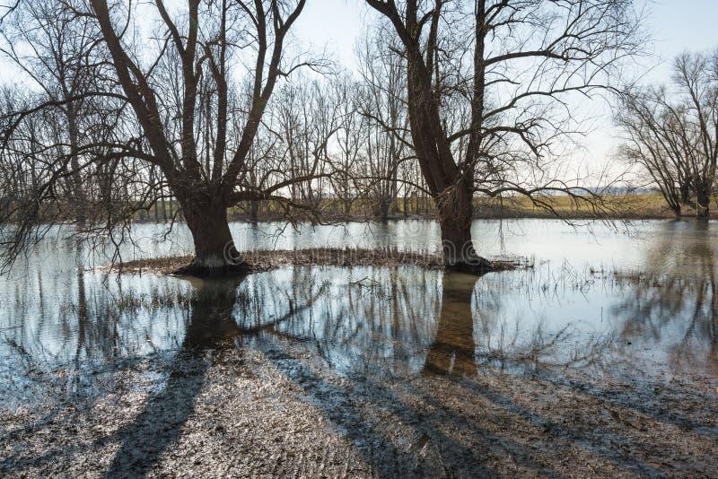 Подсвеченное изображение силуэтов дерева отразило в поверхности воды стоковые фото