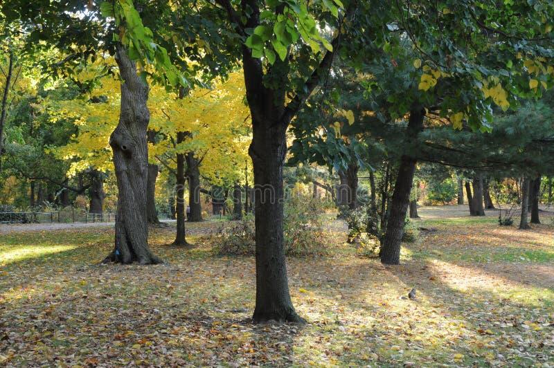Подсвеченные деревья осени с белкой стоковые фотографии rf