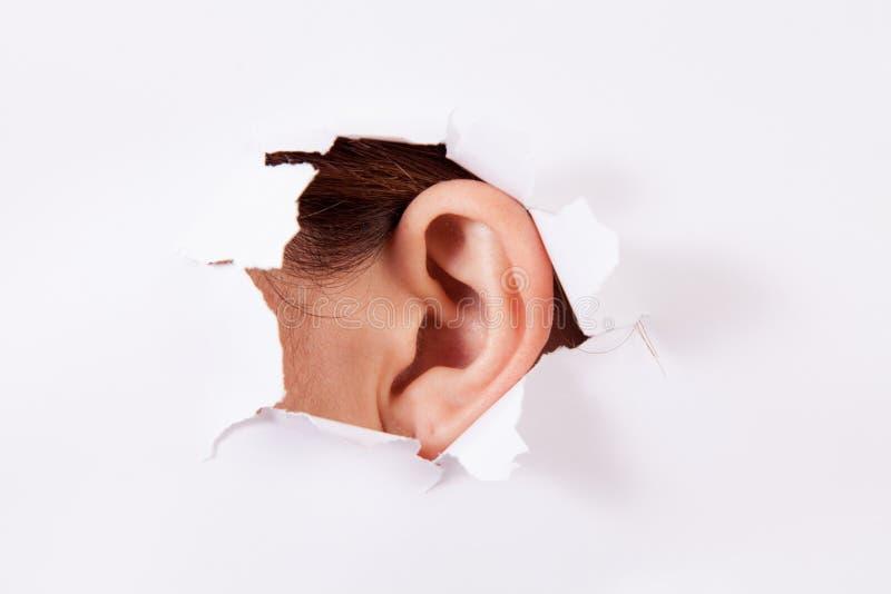 Подслушивайте - ухо черепашки стоковое фото rf
