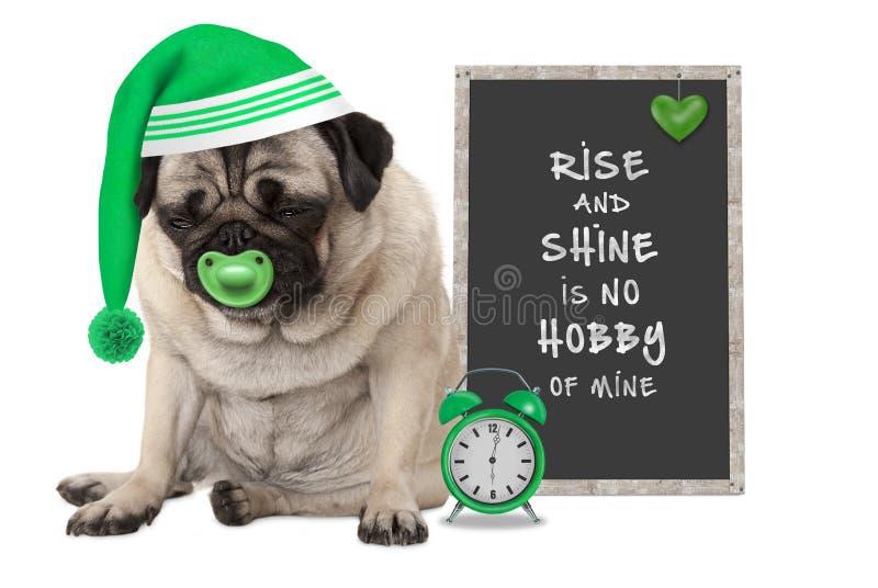 Получающ вверх в раннем утре, сварливая собака щенка мопса с крышкой спать, будильник и знак с текстом поднимают и блеск никакое  стоковые фото