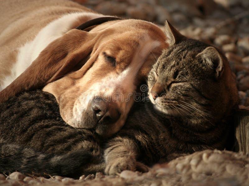 Подушка кота, одеяло собаки стоковое фото rf