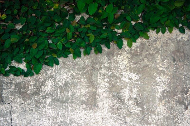 Подъем велкро на старой бетонной стене стоковые изображения