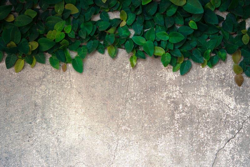 Подъем велкро на старой бетонной стене стоковая фотография rf