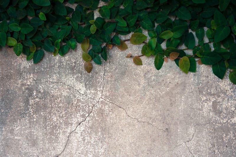 Подъем велкро на старой бетонной стене стоковые фото