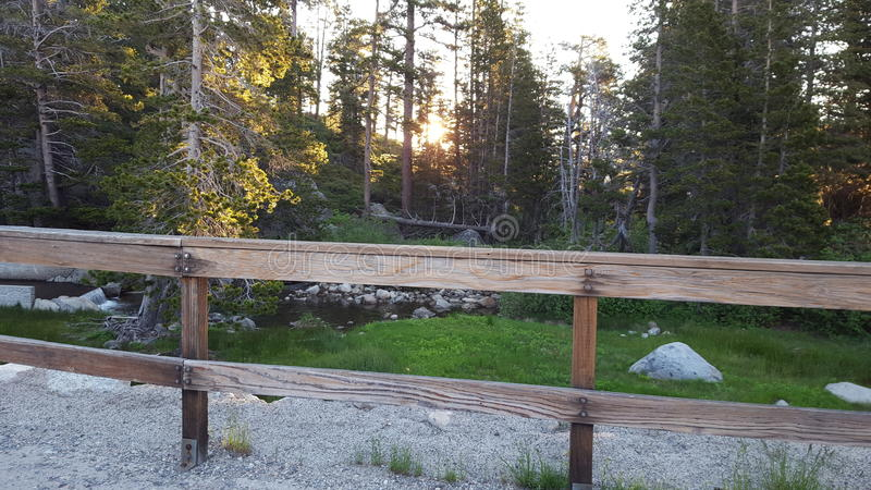 Подъем Солнця в древесины стоковое фото