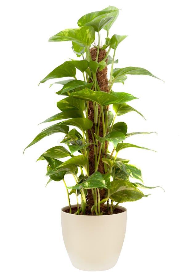польза завода листьев дома детали предпосылки стоковое фото