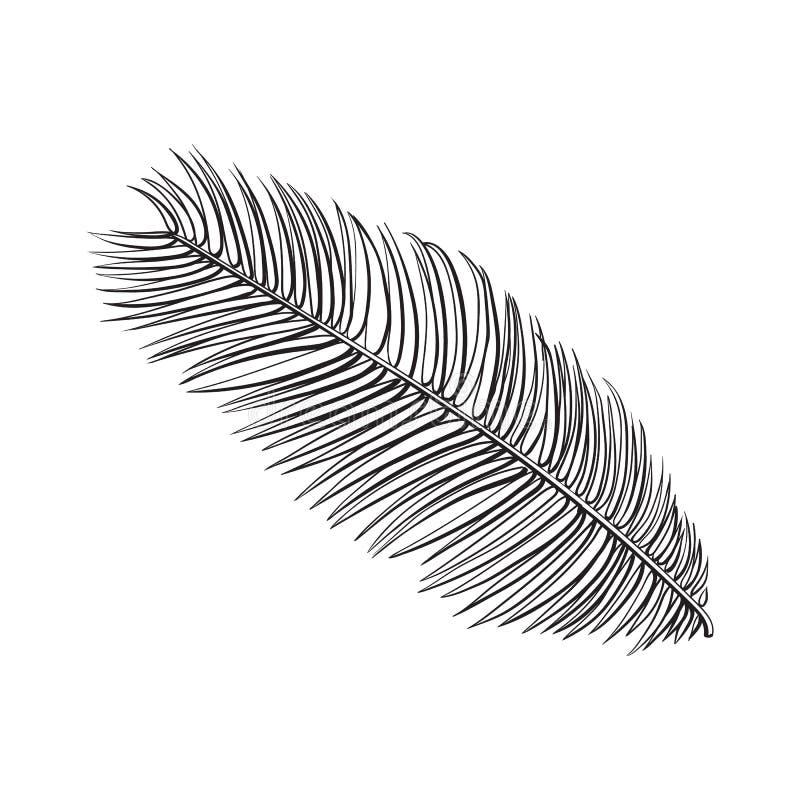 Польностью свежие лист пальмы саго, иллюстрации вектора эскиза бесплатная иллюстрация