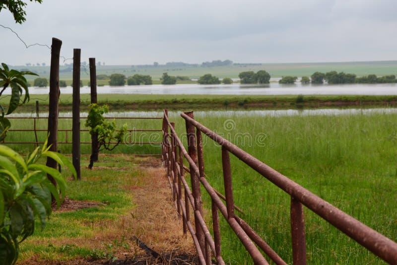 Поляки в поле с обзором воды стоковое изображение rf