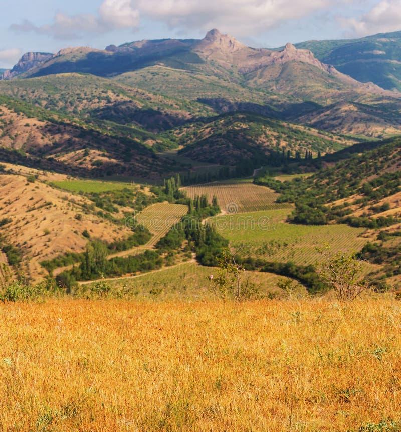 Поля в Крыме стоковое изображение