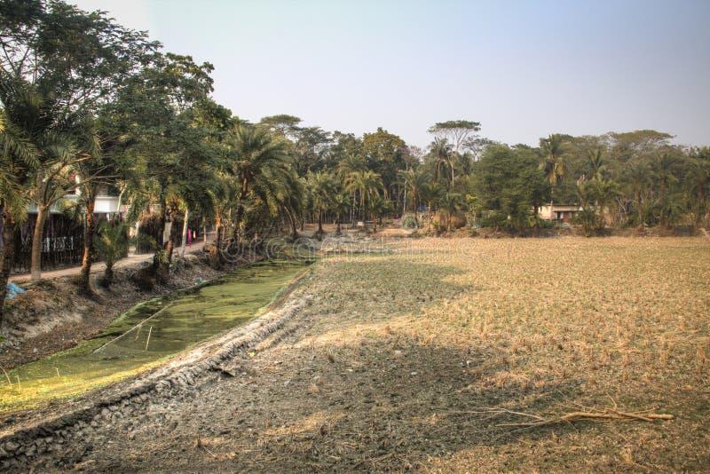Поля деревни в Bagerhat, Бангладеше стоковые фотографии rf