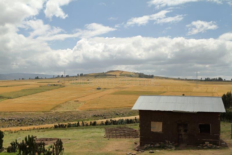 Поля и ландшафты зерна в горах связки Эфиопии стоковая фотография rf