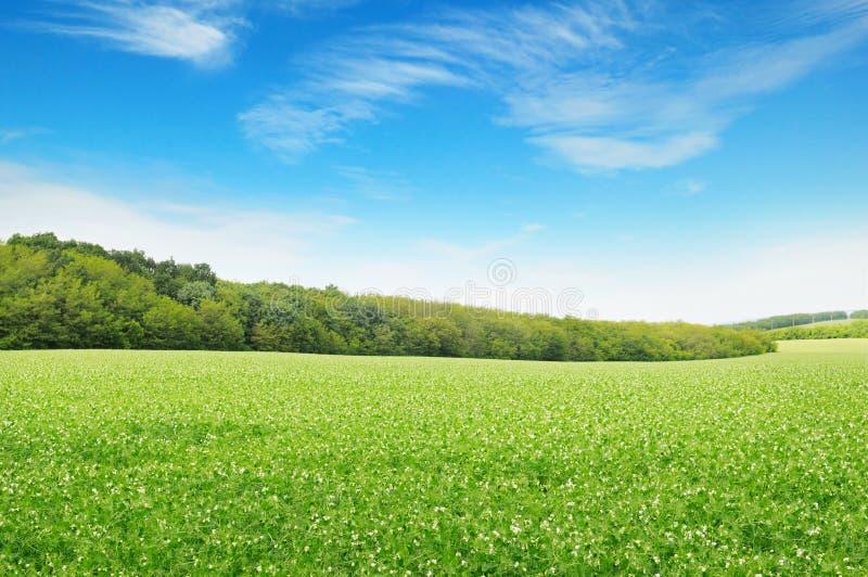 поля и красивые облака стоковые фотографии rf