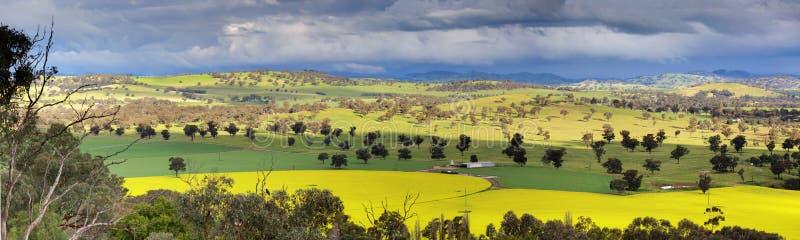 Поля панорамы канола и обрабатываемых земель стоковое фото rf