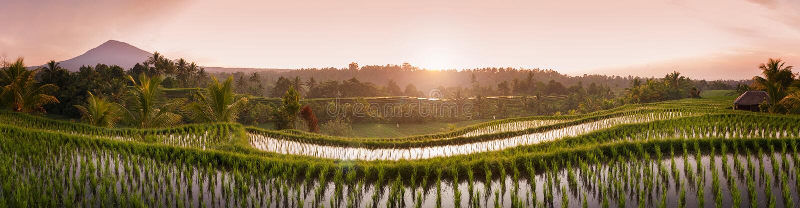 Поля риса Бали стоковое фото rf