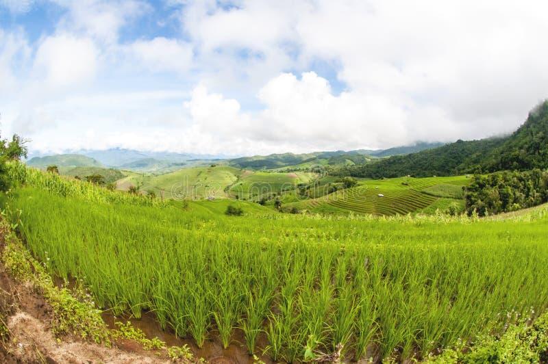 Download Поля риса террасы стоковое изображение. изображение насчитывающей востоковедно - 33736427