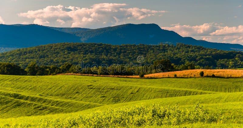 Поля фермы и взгляд горы Massanutten в Shenandoah v стоковые фотографии rf
