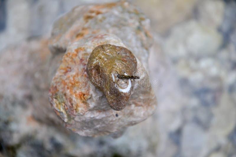 Подёнка на башне камешков стоковые изображения