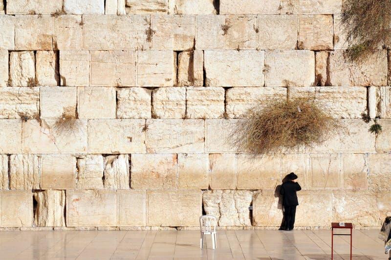 Правоверный еврейский человек молит на западной стене стоковые изображения