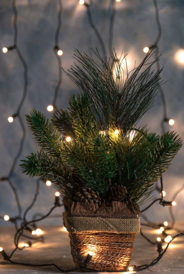 Праздник рождества, рождественская елка без украшений в баке на заднем плане светит гирлянде oprytk стоковая фотография
