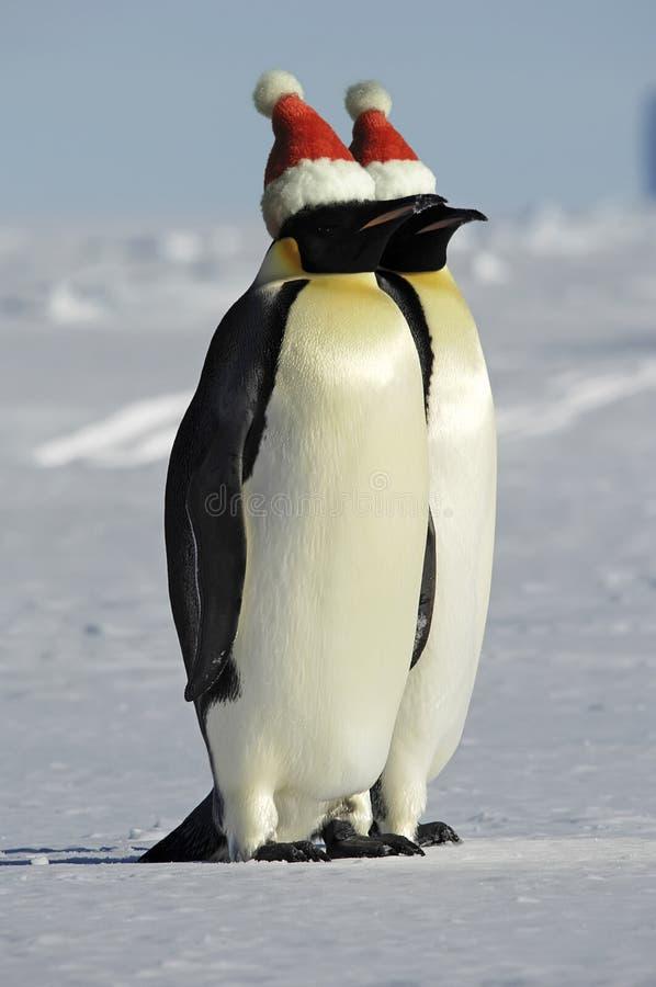 празднует xmas пингвинов пар стоковые фото