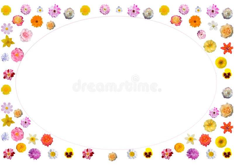 Праздничная рамка красочных цветков иллюстрация вектора