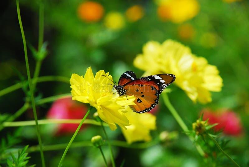 Пребывание бабочки на желтом цветке стоковые фото