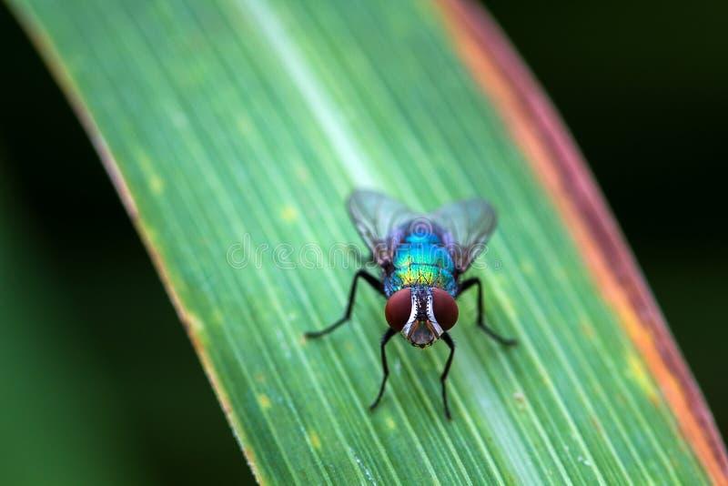 Пребывание мухы на лист к неподвижному после летать в природу стоковое фото rf