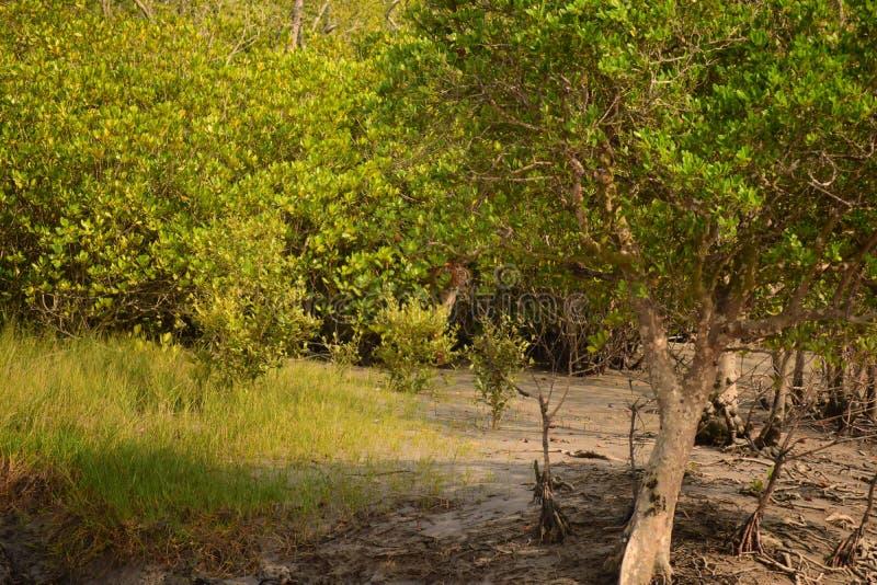 Превосходное камуфлирование тигра d королевского Бенгалии стоковое фото rf