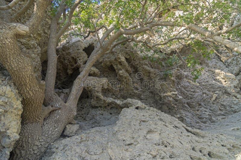 Превращенные в камень залеми коралла стоковое изображение