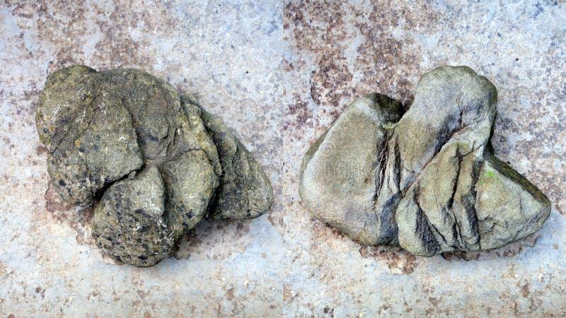 Превращенный в камень падать динозавра стоковое фото rf