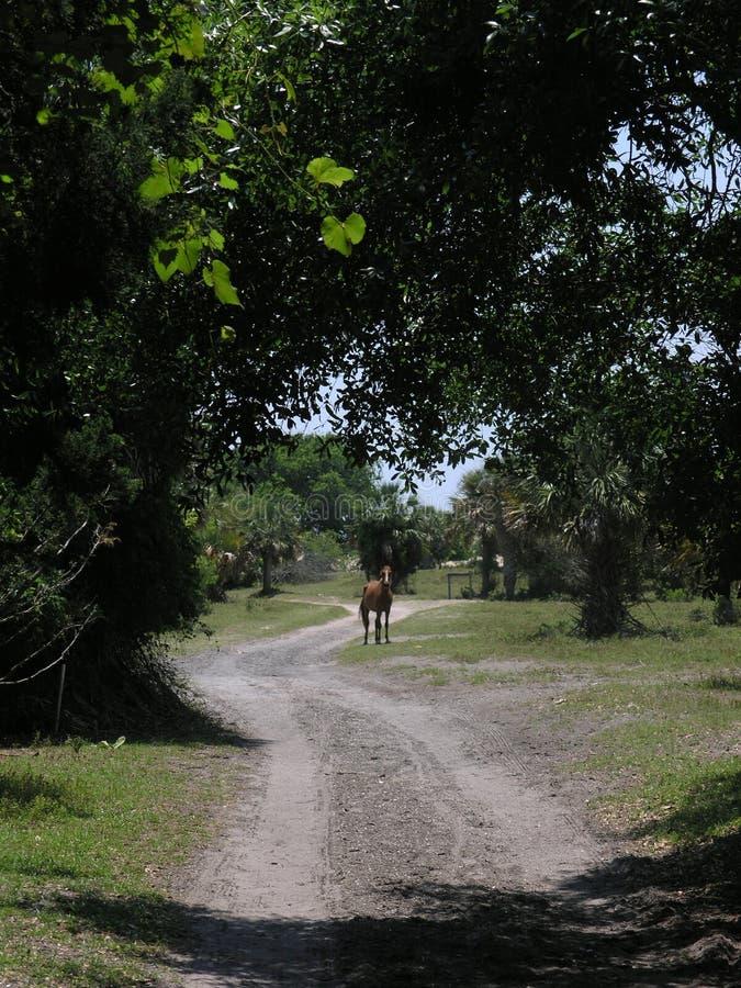 преграждать дорогу лошади стоковое фото
